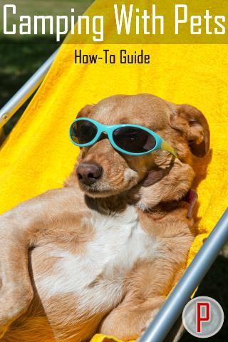 Guide to Camping with Pets